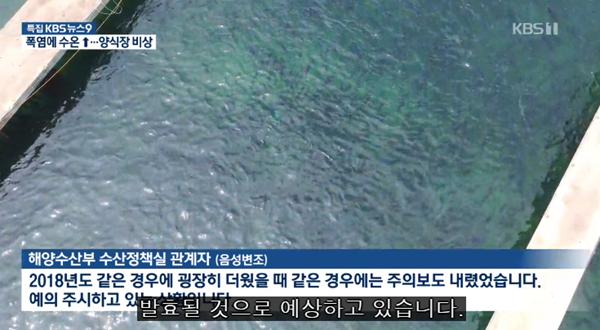 韩国遇接连发布酷暑预警气象状况十分罕见 东海岸水温升高或殃及鱼群